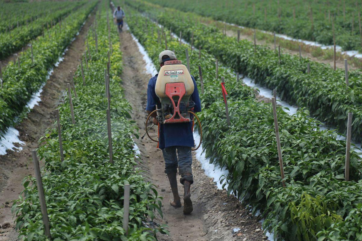 Monsanto impugna en los tribunales la prohibición del glifosato en México