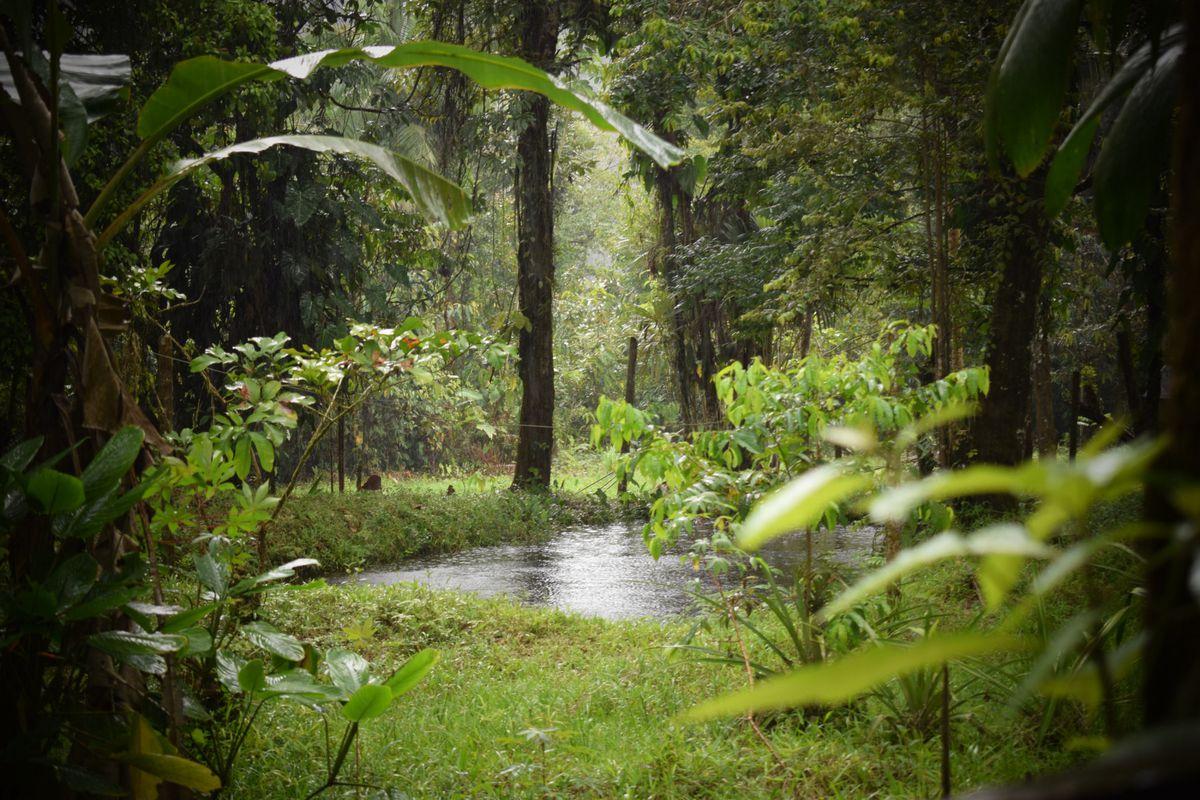 Para ayudar al planeta, debemos ayudar a los protectores de los bosques  Red de expertos  Planeta del futuro