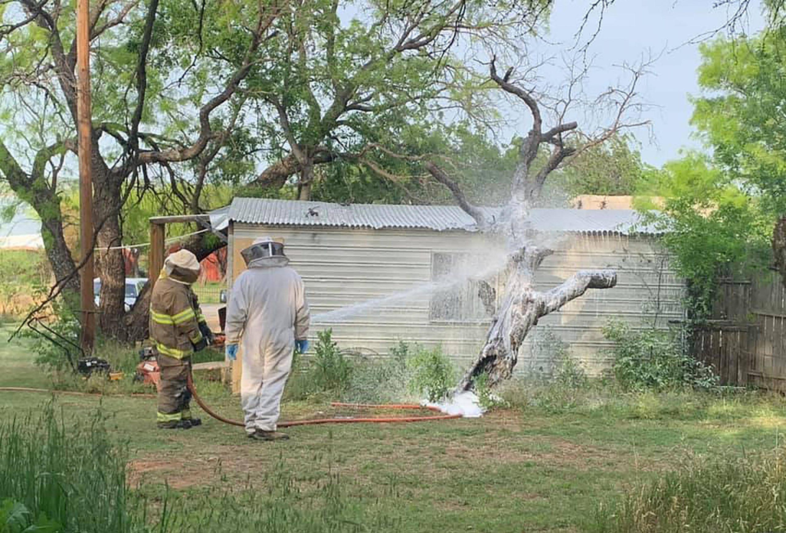 Un hombre de Texas asesinado en un ataque de abejas agresivas