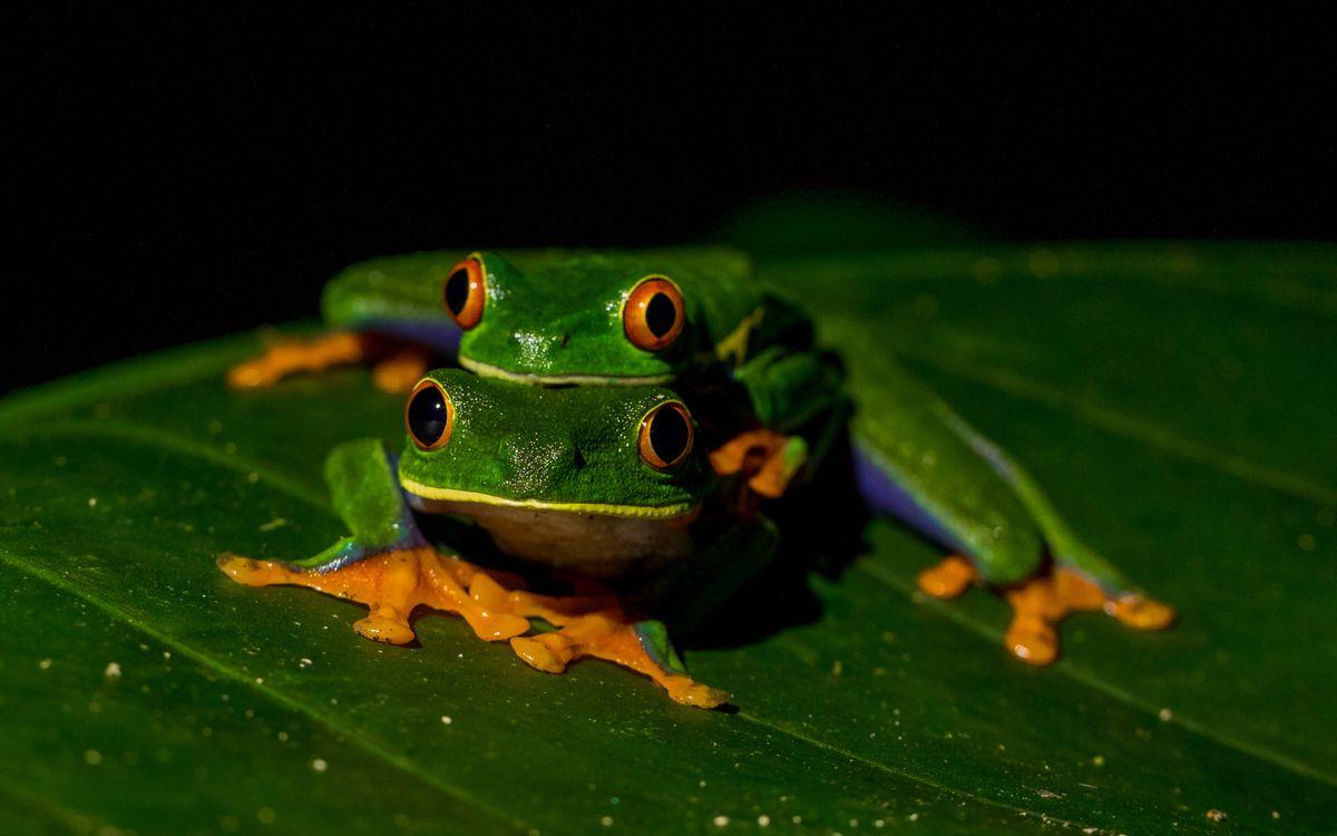 ¿Quieres controlar la malaria?  Protege a las ranas  Planeta del futuro