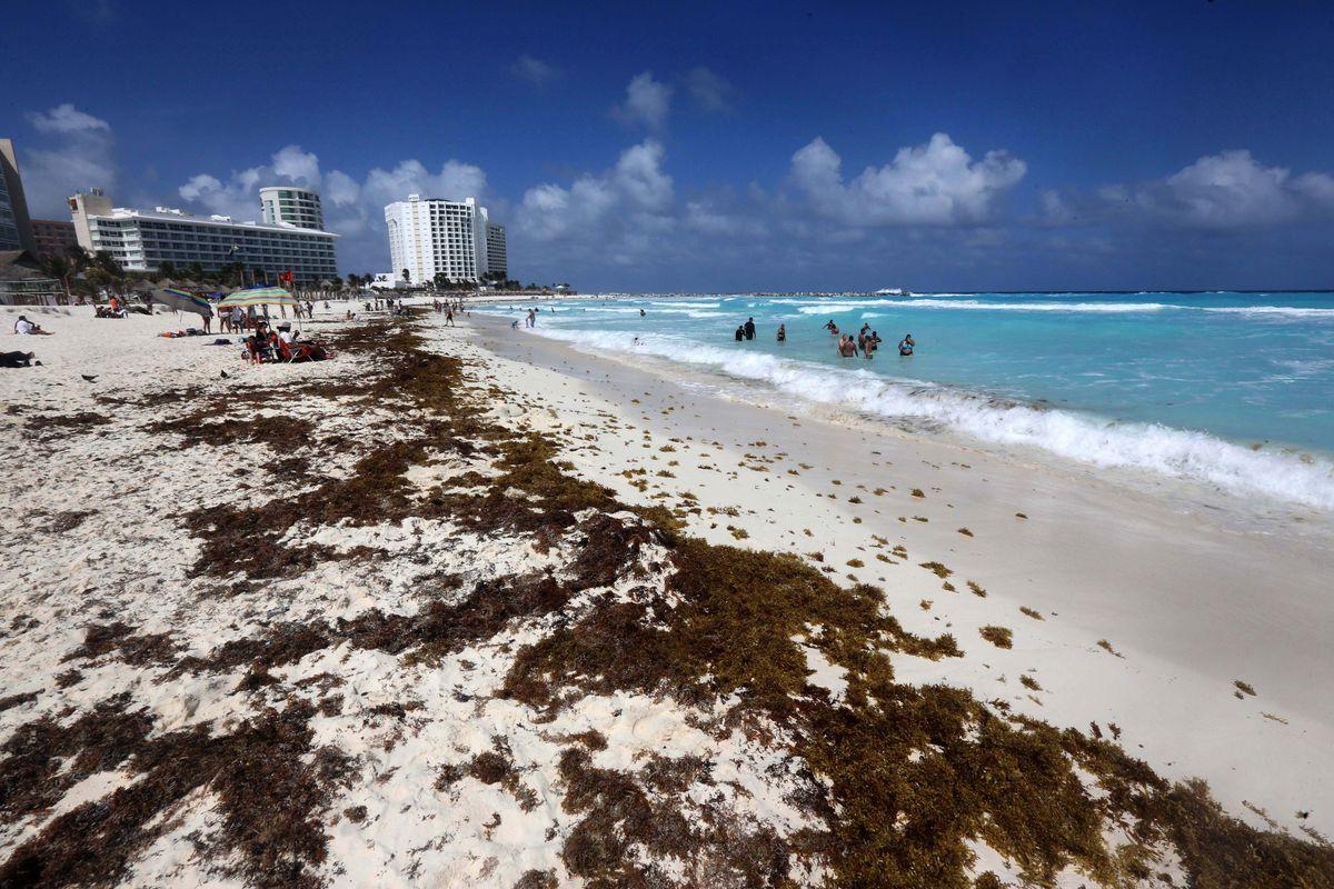 El sargazo llegará al Caribe mexicano en mayores cantidades que en 2018, según la Universidad del Sur de Florida.