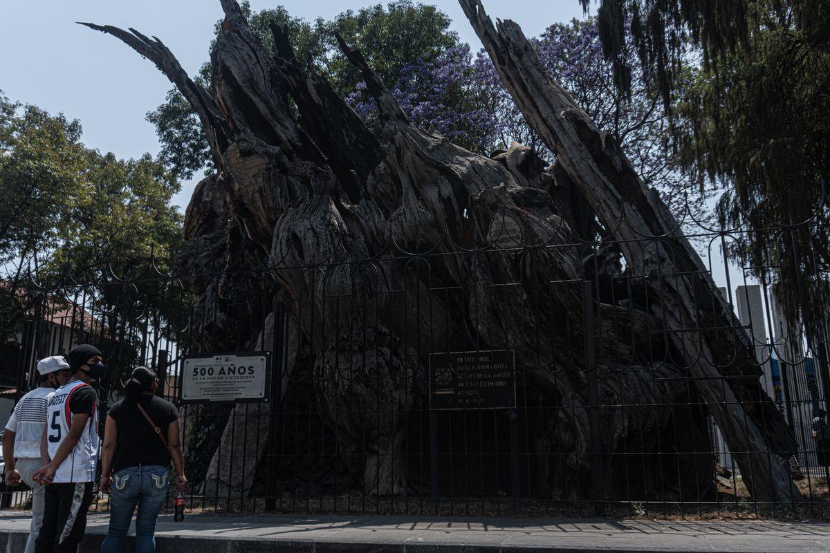 Fundación Tenochtitlán: la triste noche de Hernán Cortés ya es ganadora