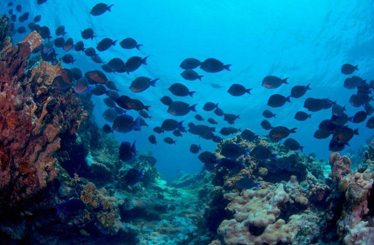 Océano: La pesca ilegal controla los ecosistemas marinos más ricos de México