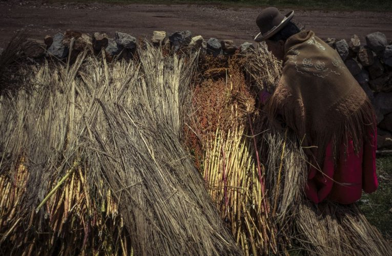 Para salvar la quinua coloreada, los granos olvidados del Perú  Planeta del futuro
