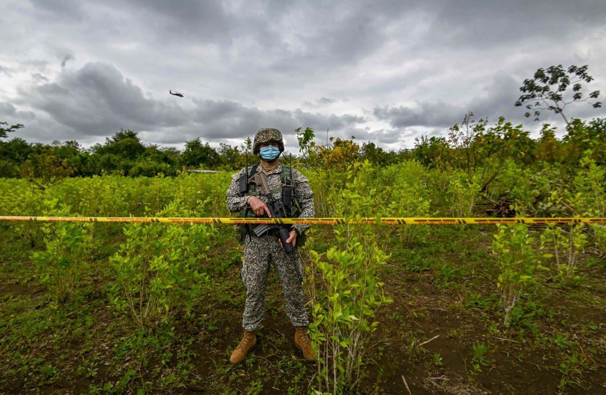 Colombia reduce cultivos de coca por tercer año consecutivo  Internacional