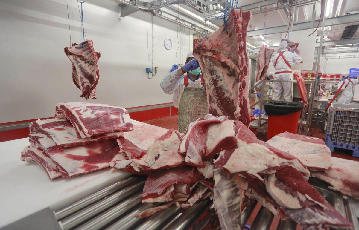 ¿Debo reducir el consumo de carne?  La ciencia dice que sería más saludable y sostenible  Cambio climático  Clima y medio ambiente