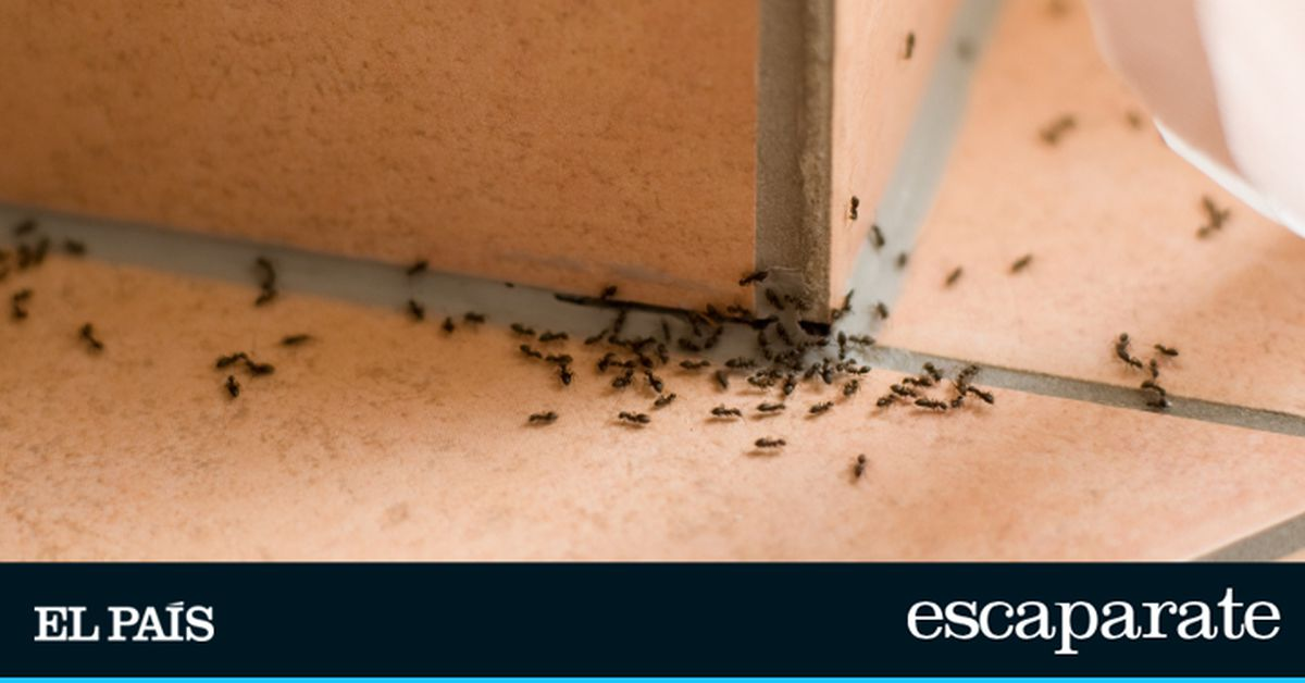 12 insecticidas y repelentes baratos para matar hormigas en casa en verano  Escaparate