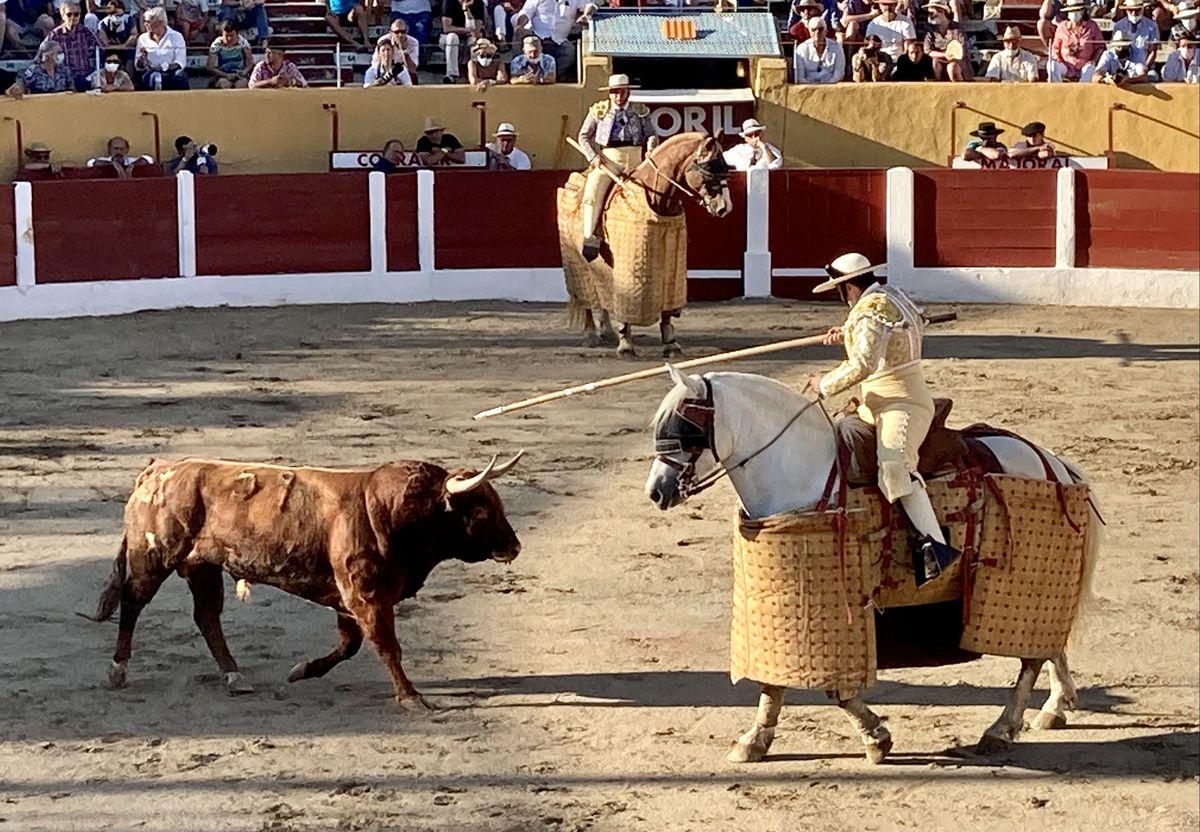 Buhardilla Durissima de la Casta Navarra a su regreso a las plazas  Cultura