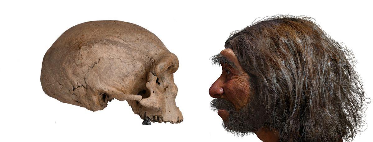 Homo sapiens: por qué somos la única especie humana del planeta  Ciencias