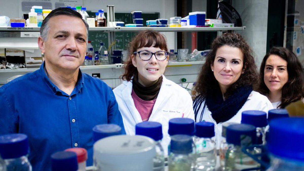 Mitocondrias: la enfermedad oculta de las pilas biológicas  Ciencias