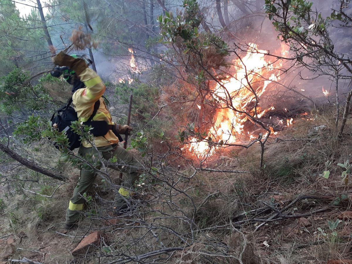 Un incendio quema 400 hectáreas de bosques de pinos y castaños en Málaga  España