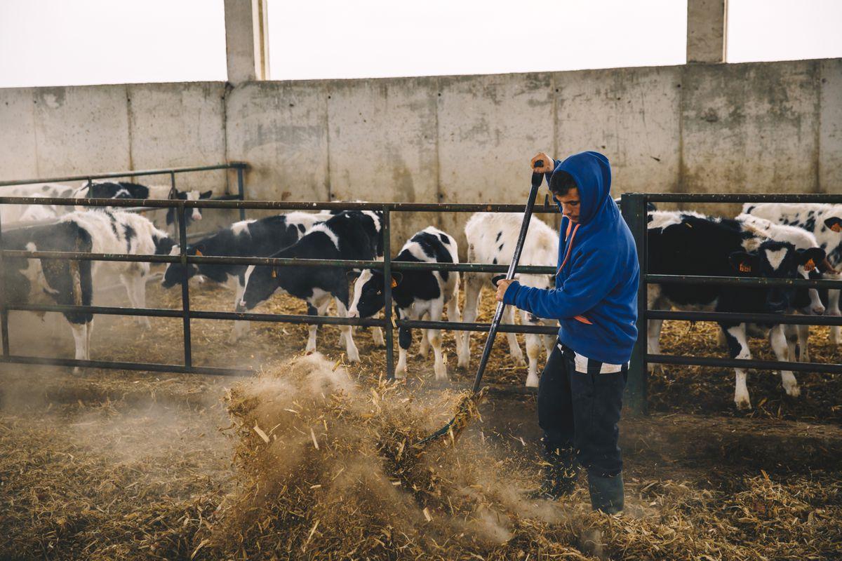Cooperativas agrícolas: medios europeos para cambiar el purín de biogás  Negocio