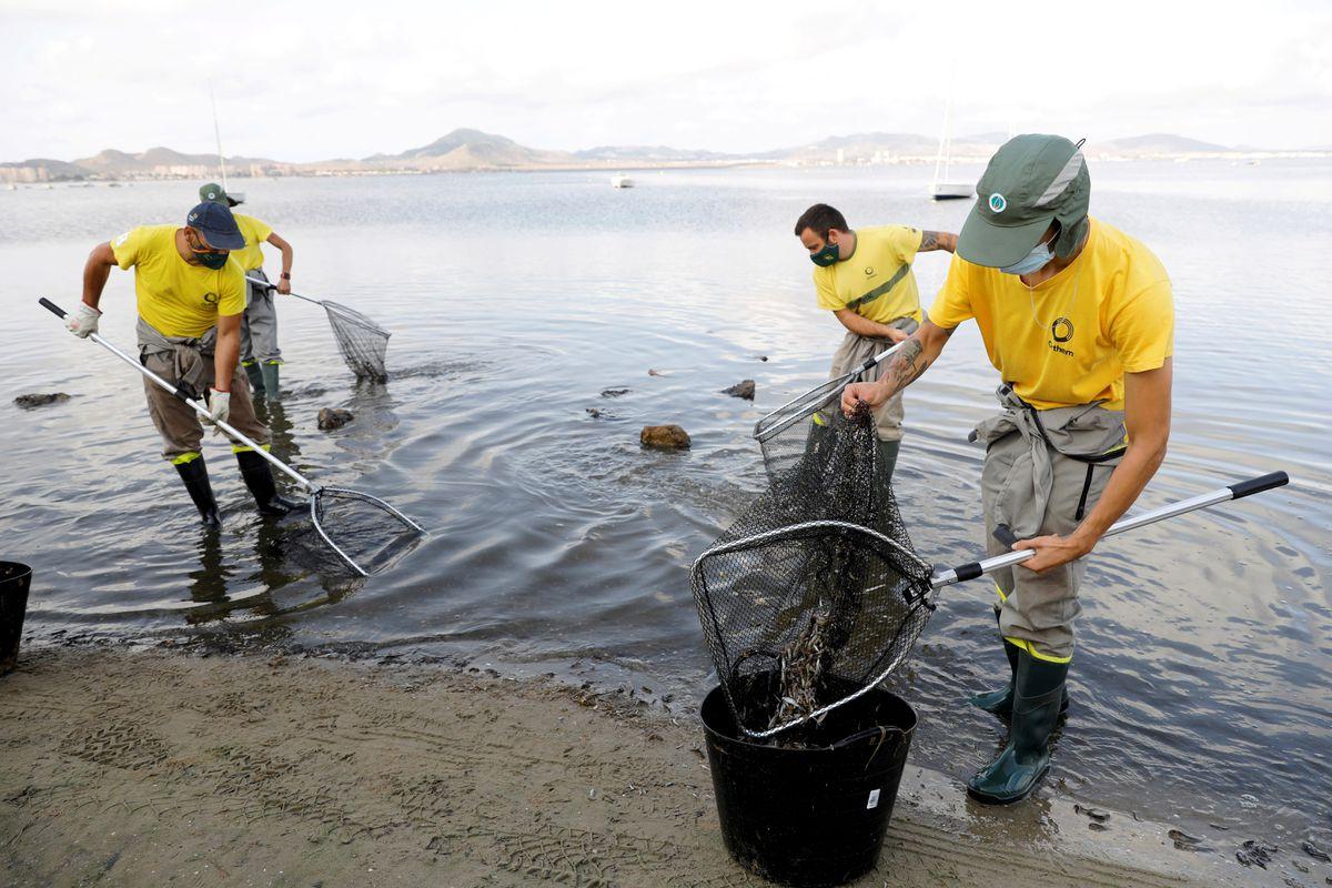 Murcia: Seis días de desastre ecológico en Menor Mar con miles de peces muertos  Clima y medio ambiente