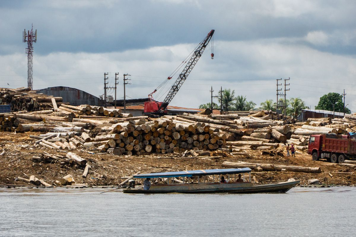 """Perú: aquí se explica cómo """"lavar"""" la madera ilegal del Amazonas  Planeta del futuro"""