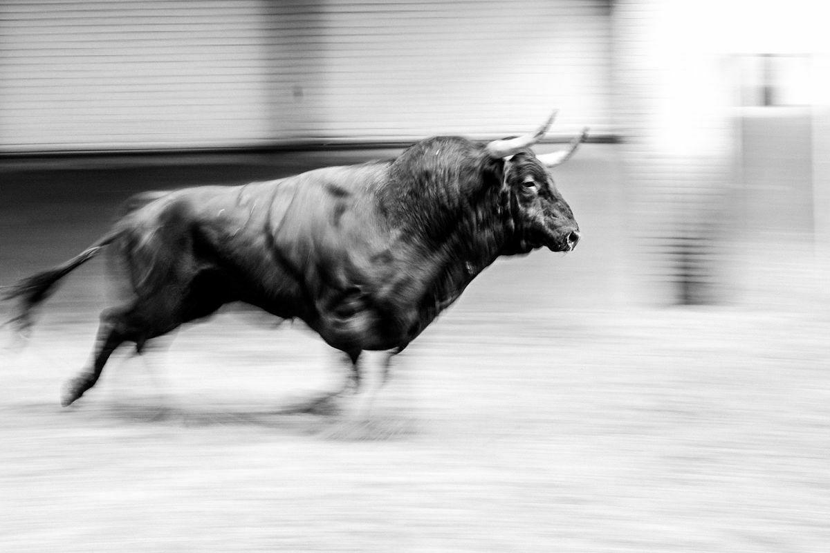 Bull Pandemia (2): El drama de la corrida de toros es que hoy no vale lo que cuesta criarla    Cultura