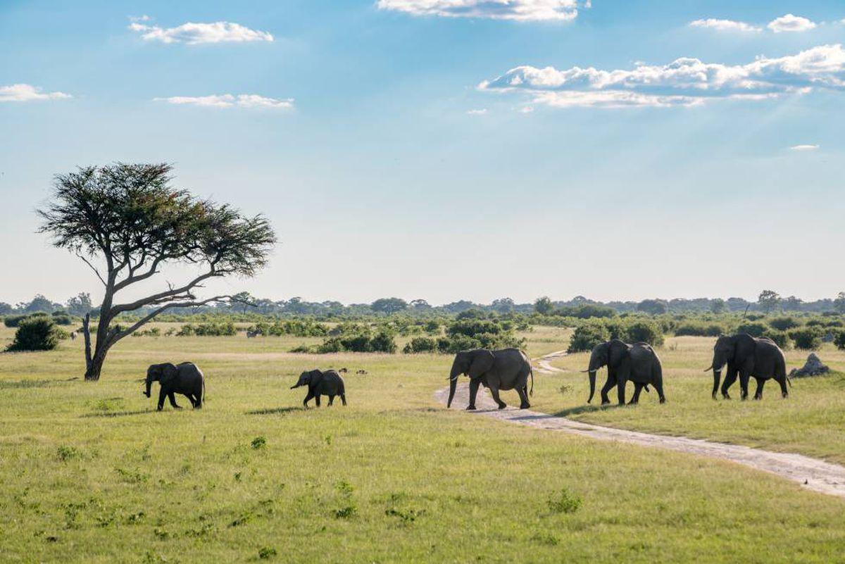 Cambio cimático: cuando los elefantes mueren de sed  Clima y medio ambiente