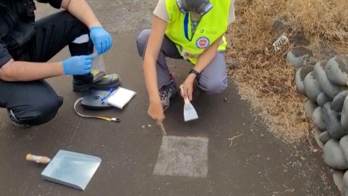 Cumbre Vieja: Video |  La ciencia pide a las palmeras que ayuden a recolectar cenizas del volcán  Ciencias
