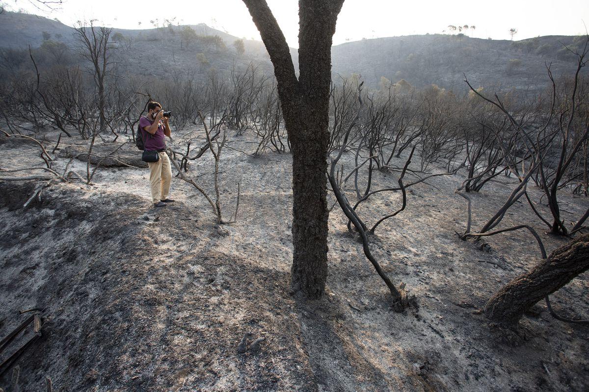 El gobierno andaluz dice que el incendio de Sierra Bermeja en Málaga fue deliberado |  España
