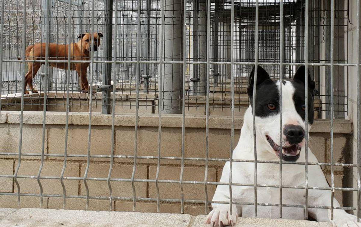 Lucena: un niño de cinco años muere por un ataque de perro en Córdoba  España