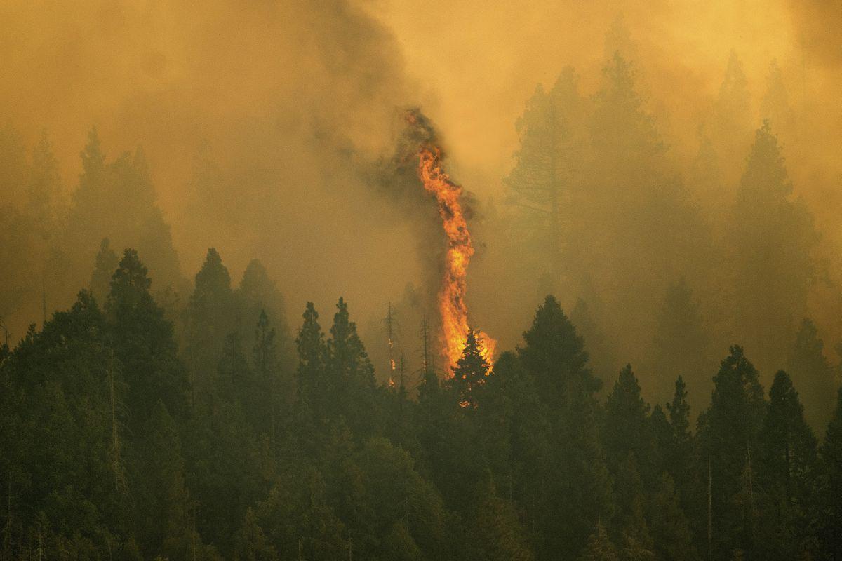 Un incendio forestal amenaza a las secuoyas milenarias de California  Internacional