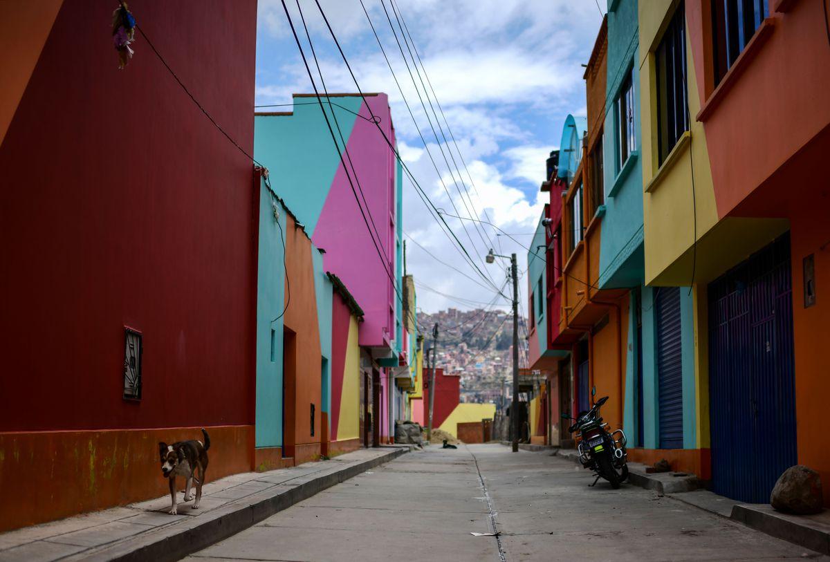 Indefensos como perros: animales en la literatura latinoamericana  Babel